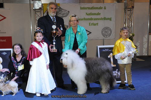 Nat. Erfurt 2015 Bester Veteran in Show